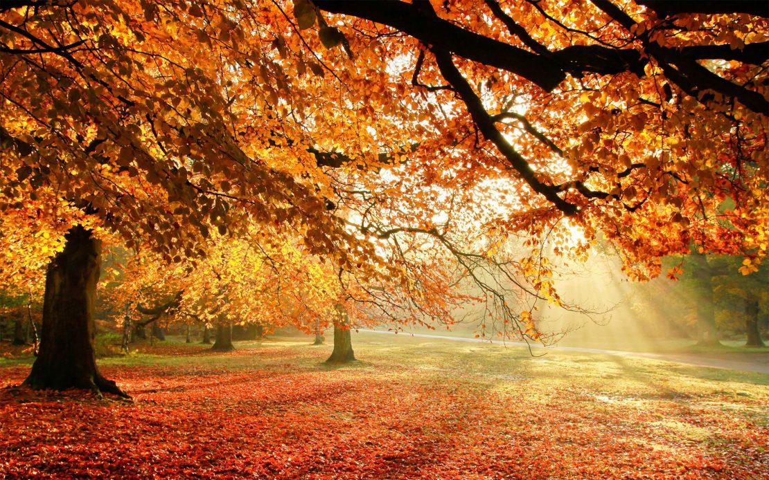 Autumn Apartment Anticipation_